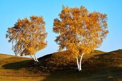 Los árboles de la caída en la puesta del sol del pasto Imagenes de archivo