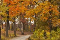 Los árboles de la naranja y del oro alinean una trayectoria a través de Morton Arboretum fotografía de archivo