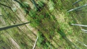 Los árboles de maderas de árboles forestales plantan la opinión aérea del verano del fondo de la naturaleza metrajes