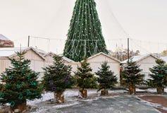 Los árboles de navidad comercializan con el árbol principal de Navidad en Vilna Lituania Fotografía de archivo
