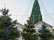 Los árboles de navidad comercializan con el árbol principal Vilna de Navidad en Lituania Foto de archivo libre de regalías