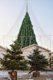 Los árboles de navidad comercializan con el árbol principal Vilna Lituania de Navidad Imagen de archivo