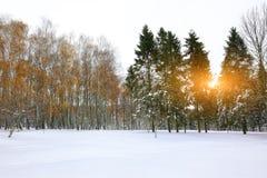 Los árboles de navidad cubiertos con nieve en la ciudad parquean Porciones de nieve Foto de archivo