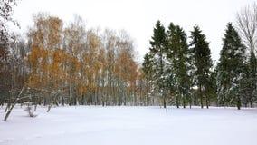Los árboles de navidad y los abedules cubiertos con nieve en la ciudad parquean Imágenes de archivo libres de regalías