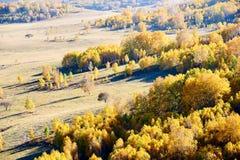 Los árboles de oro del otoño en los prados Imagen de archivo libre de regalías