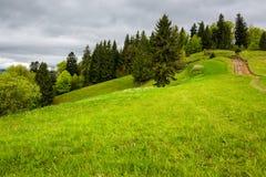 Los árboles de pino acercan al valle en cuesta de montaña Foto de archivo libre de regalías