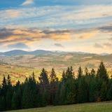 Los árboles de pino acercan al valle en montañas en la ladera Imágenes de archivo libres de regalías
