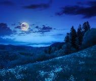Los árboles de pino acercan al valle en montañas en la ladera en la noche Fotos de archivo