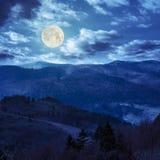 Los árboles de pino acercan al valle en montañas en la ladera en la noche Foto de archivo