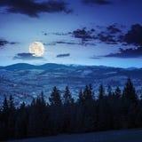 Los árboles de pino acercan al valle en montañas en la ladera en la noche Fotos de archivo libres de regalías