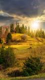 Los árboles de pino acercan al valle en montañas en la ladera en la puesta del sol Imagen de archivo libre de regalías
