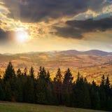 Los árboles de pino acercan al valle en montañas en la ladera en la puesta del sol Foto de archivo