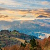 Los árboles de pino acercan al valle en montañas en la ladera en la salida del sol Imagen de archivo