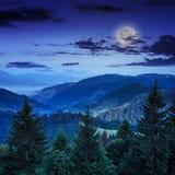 Los árboles de pino acercan al valle y al bosque en la ladera Fotografía de archivo libre de regalías