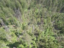 Los árboles de pino cayeron debido a un huracán, foto del paisaje de la antena del abejón fotos de archivo libres de regalías