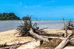 Los árboles de pino de la matanza de la onda en Long Beach localizan la playa de Niyang Foto de archivo