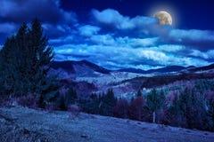 Los árboles de pino en la ladera debajo del cielo azul con las nubes acercan al valle adentro Foto de archivo libre de regalías