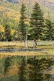 Los árboles de pino invirtieron la reflexión en agua Imagen de archivo