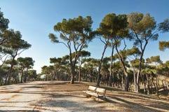 Los árboles de pino y un banco en Dehesa parquean, Madrid, España Foto de archivo