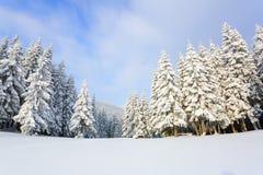 Los árboles debajo de la nieve están en el césped Foto de archivo libre de regalías