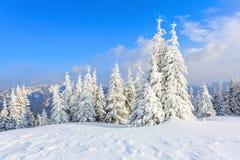 Los árboles debajo de la nieve están en el césped Fotografía de archivo
