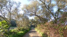 Los árboles del camino Fotos de archivo