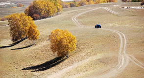 Los árboles del camino y de abedul del vehículo del campo a través en altiplanicie colocan Imagenes de archivo