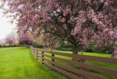 Los árboles del flor Imágenes de archivo libres de regalías