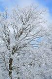 La nieve se reunió árboles Fotos de archivo
