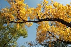 Los árboles del otoño fotografía de archivo