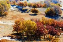 Los árboles del otoño Imagen de archivo libre de regalías