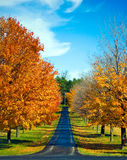 Los árboles del otoño alinean un camino Imágenes de archivo libres de regalías