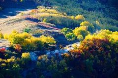 Los árboles del otoño en el paisaje de las colinas Fotografía de archivo libre de regalías