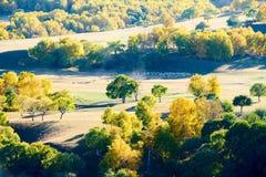 Los árboles del otoño en el paisaje del prado Imagen de archivo