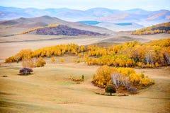 Los árboles del otoño en el prado Fotografía de archivo