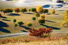 Los árboles del otoño en el prado Foto de archivo