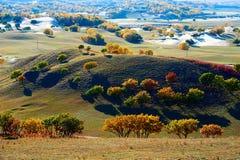 Los árboles del otoño en el prado Imagenes de archivo