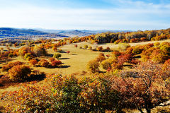 Los árboles del otoño en el prado Imagen de archivo