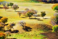 Los árboles del otoño en el prado Fotos de archivo