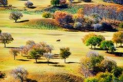Los árboles del otoño en la estepa de oro Imágenes de archivo libres de regalías
