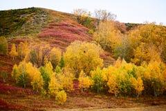 Los árboles del otoño en la ladera Imagen de archivo