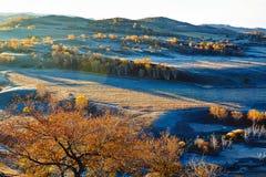 Los árboles del otoño en la ladera Imágenes de archivo libres de regalías