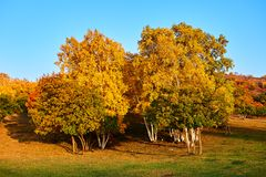 Los árboles del otoño en la puesta del sol de la estepa Fotos de archivo libres de regalías