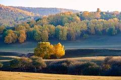 Los árboles del otoño en la puesta del sol de la ladera Fotografía de archivo libre de regalías