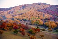 Los árboles del otoño en la puesta del sol de los prados Imagen de archivo libre de regalías