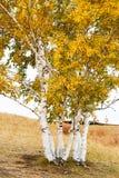 Los árboles del otoño en los prados Fotografía de archivo libre de regalías