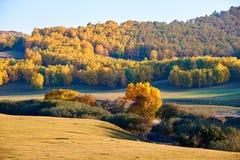 Los árboles del otoño en los prados Fotos de archivo