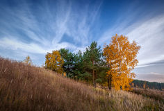 Los árboles del otoño en una colina se inclinan en la salida del sol Imagen de archivo libre de regalías