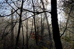Los árboles del otoño silueteados contra la mañana se empañan en el valle Imágenes de archivo libres de regalías