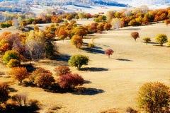 Los árboles del otoño y en la pradera Imagen de archivo libre de regalías